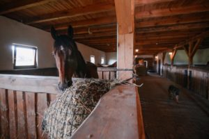 pension for horses