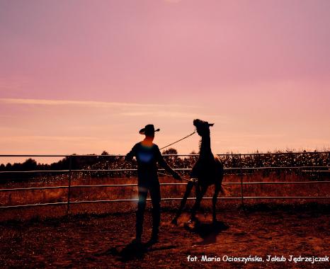 szkolenie natural horsemanship