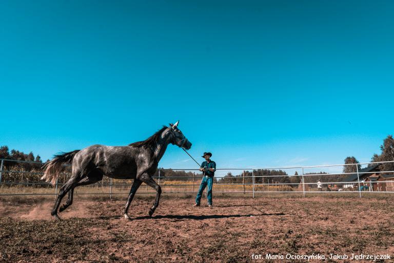 Trening konia na roundpenie
