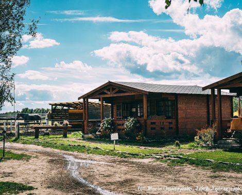 Widok na domek i konia w tle