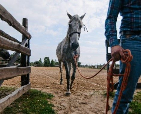 Mężczyzna wyprowadzający konia z maneżu