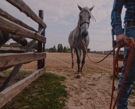 Trening koni